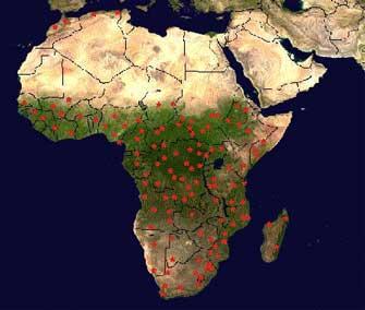 Vorkommen der afrikanischen Zwergmaus in Afrika